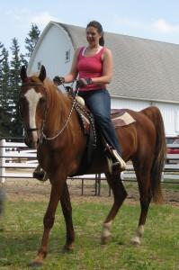 17h reg American Saddlebred